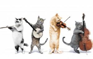 21 mësime jete nga ... macet!