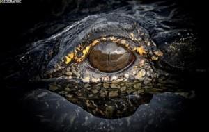 """Konkursi i """"National Geographic"""", pamje spektakolare"""