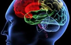 Kush flet dy gjuhë mbrohet nga Alzheimer!