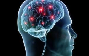 """Studimi, zbulohet në tru """"harta e terrorit"""""""