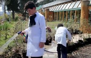 Mbrojtja e mjedisit, pjesë e programit mësimor