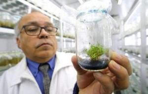 Molekulat që mbrojnë bimët nga rrezatimi diellor