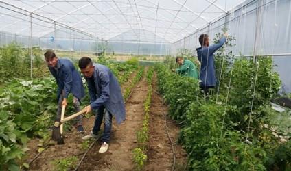 Nxënësit e shkollës bujqësore ndërtojnë një serë
