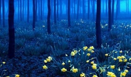 Pyjet më misterioze në botë…