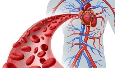 "Biologji VIII, tema ""Sistemi i qarkullimit të gjakut"""