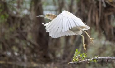 """Fauna e mrekullueshme në Liqenin e Shkodrës e fotografuar nga """"Wild Europe"""""""