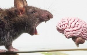 Shkencëtarët ndërtojnë trurin digjital të miut