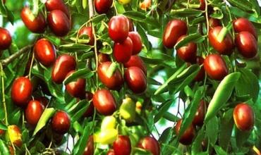 Hidet, fruti ideal i stinës së vjeshtës